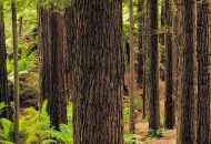 Neal Pritchard: A bushwalker's view of Otway National Park in VIC